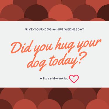 Give-your-dog-a-hug-wednesday