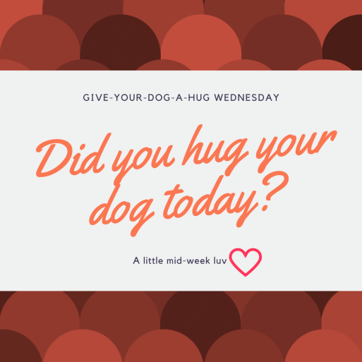 Give-your-dog-a-hug-wednesday