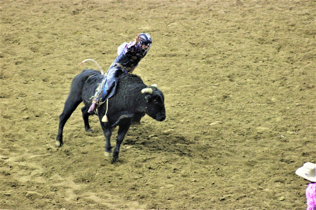 cowboy riding a bucking steer