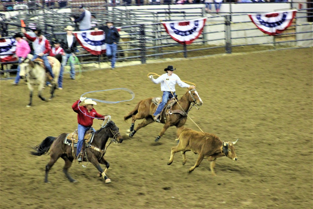 two cowboys on two horse raise their lassos to capture a wild steer.