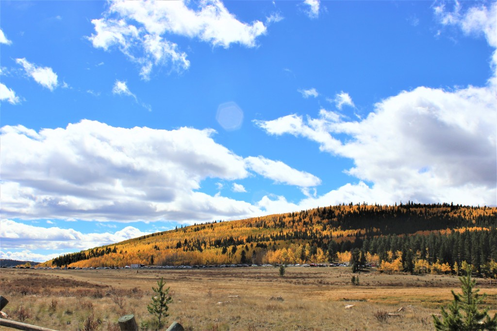 trees in various stages of changing color as winter approaches