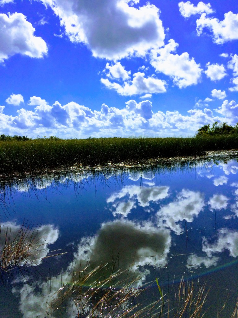 blue sky reflected in the still water in the Everglades as you go in the airboat.